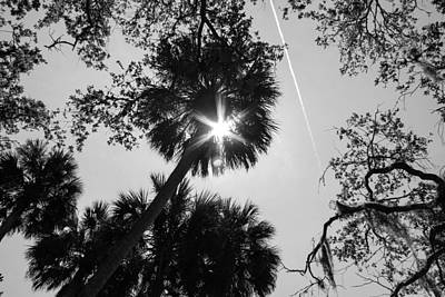 Photograph - Through The Palms by Jessica Brown