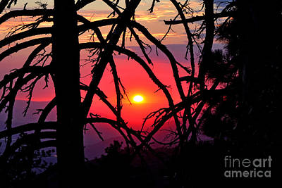 Photograph - Through The Pines Landscape by Third Eye Perspectives Photographic Fine Art