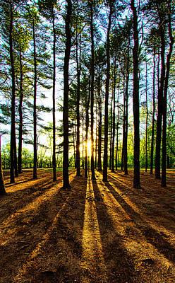 Through The Pines Art Print by Phil Koch