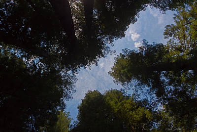 Photograph - Through The Redwoods Toward The Heavens by Heidi Smith