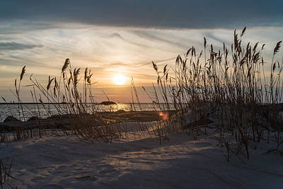Beach Photograph - Through The Reeds by Kristopher Schoenleber