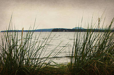Photograph - Through The Reeds by Marilyn Wilson