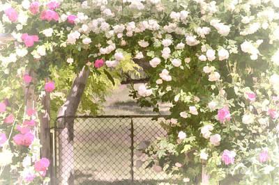 Through The Rose Arbor Art Print by Elaine Teague