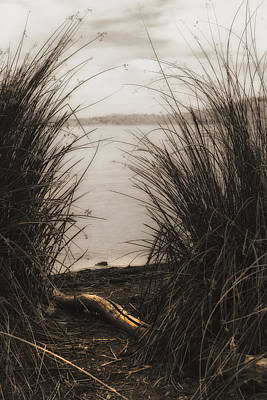 Photograph - Through The Rushes by Kandy Hurley