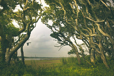 Topsail Island Photograph - Through The Twisty Trees by Shane Holsclaw