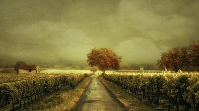 Through The Vineyard Art Print