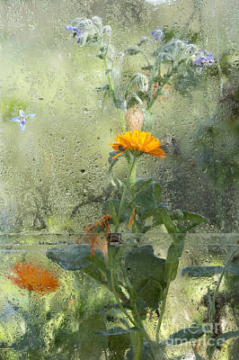 Asteraceae Photograph - Through The Window  by Tim Gainey