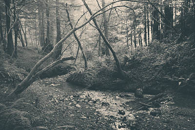 Through The Woods Print by Laurie Search