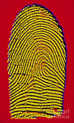 Galton Photograph - Thumbprint by Scott Camazine