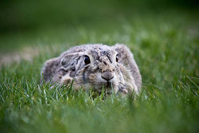 Thumperbunny - Wild Bunny - Casper Wyoming Original