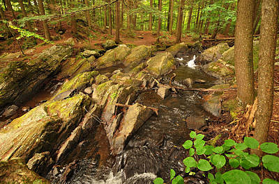 Photograph - Thundering Brook Falls Vermont by David Seguin