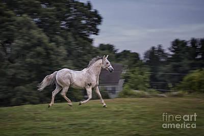 Panning Photograph - Thundersoul by Evelina Kremsdorf