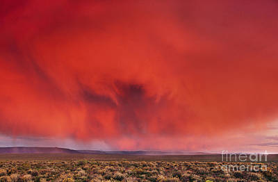 Photograph - Thunderstorm Over Karoo In Nieuwoudtville by Frans Lanting MINT Images
