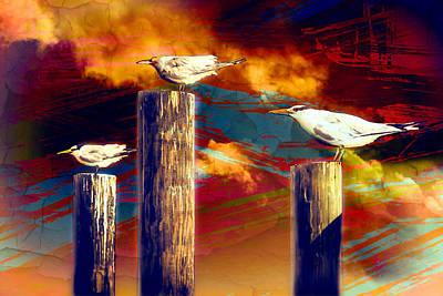 Photograph - Thus Spake The Gull by John Haldane