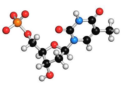 Thymidine Monophosphate Molecule Art Print by Molekuul