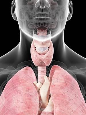 Human Head Photograph - Thyroid Anatomy by Sciepro