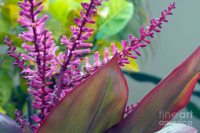 Photograph - Ti Leaf Bloom All Profits Go To Hospice Of The Calumet Area by Joanne Markiewicz