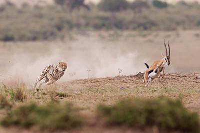 Cheetah Wall Art - Photograph - Ti Prendo by Valerio Ferraro