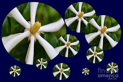 Photograph - Tiare Pinwheels by Darla Wood