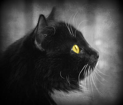 Photograph - Tia's Yellow Eyes by Marilyn Wilson