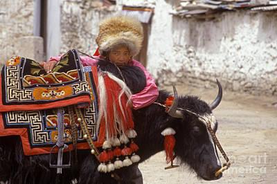 Photograph - Tibetan Girl With Yak - Lhasa Tibet by Craig Lovell
