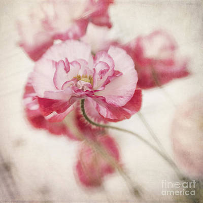 Wall Art - Photograph - Tickle Me Pink by Priska Wettstein