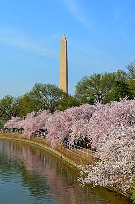 Photograph - Tidal Basin Blossoms With Washington Monument by Jeff at JSJ Photography