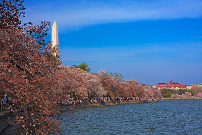Photograph - Tidal Basin Cherry Blossoms by Stuart Litoff
