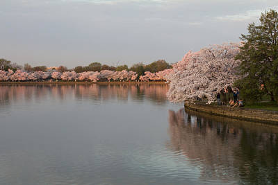Photograph - Tidal Basin In Bloom by Leah Palmer