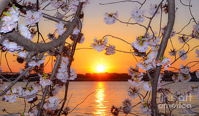 Photograph - Tidal Basin Sunset With Cherry Blossoms by Jeff at JSJ Photography