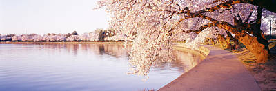 Tidal Basin, Washington Dc, District Of Print by Panoramic Images