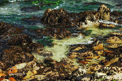 Photograph - Tidal Pools by Donna Blackhall