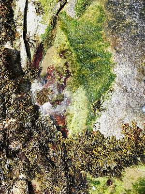 Photograph - Tide Pool Abstract by Mike Breau