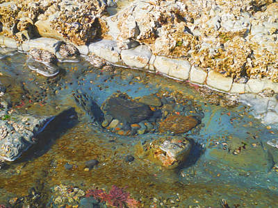 Digital Art - Tide Pool by Boyd Miller