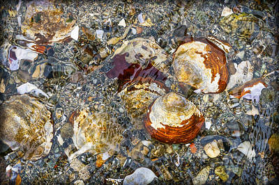 Photograph - Tide Pool Treasures by Ronda Broatch