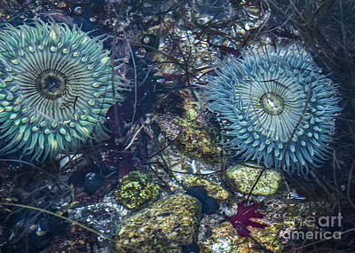 Mixed Media - Tidepool Abundance by Terry Rowe