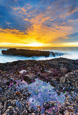 Anemone Photograph - Tidepool by Robert Bynum