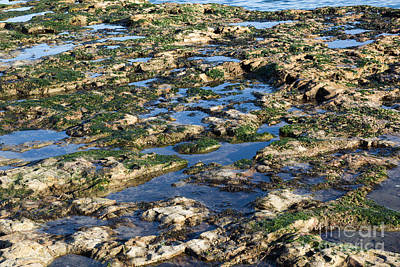 Photograph - Tidepools by Suzanne Luft