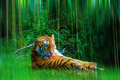 Tidy Tiger Strips Art Print by Glenn Feron