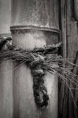 Photograph - Tied by Lynn Wohlers
