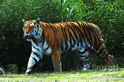 Alyssa Photograph - Tiger 1 by Alyssa Rogers