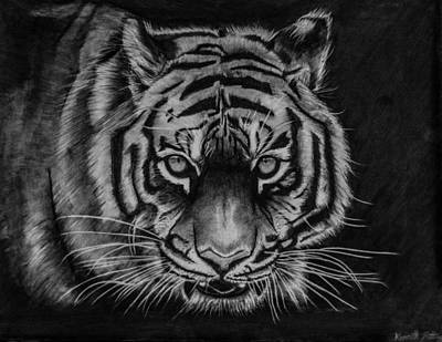 White Tiger Eyes Drawing