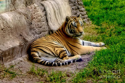 Photograph - Tiger 2 by Olga Hamilton