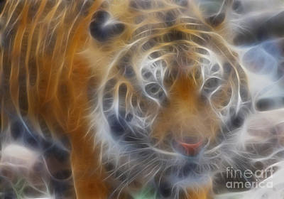 Tiger Fractal Photograph - Tiger-5315-fractal by Gary Gingrich Galleries