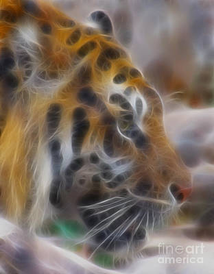 Tiger Fractal Photograph - Tiger-5344-fractal by Gary Gingrich Galleries