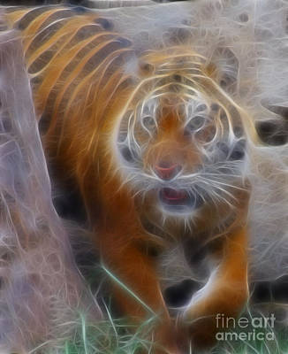 Tiger Fractal Photograph - Tiger-5362-fractal by Gary Gingrich Galleries