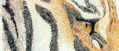Animals Drawings - Tiger Amber by Stephanie Grant