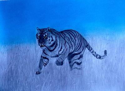 Drawing - Tiger And Blue Sky by Derrick Parsons