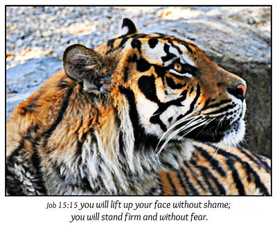 Photograph - Tiger And No Fear Scripture by Mindy Bench