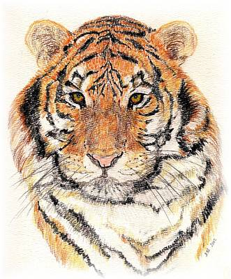Animals Drawings - Tiger Bright by Stephanie Grant